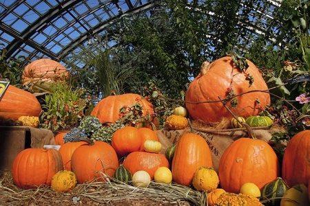 かぼちゃは英語でpumpkinではなくsquashって本当なの?