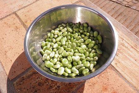 冷凍のそら豆がまずい理由と美味しく食べるレシピはこれ!