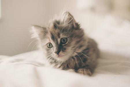猫にかぼちゃを食べさせても大丈夫なの?注意することは?