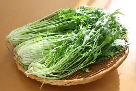 水菜が苦い!辛味などの原因と美味しく食べるレシピをご紹介!